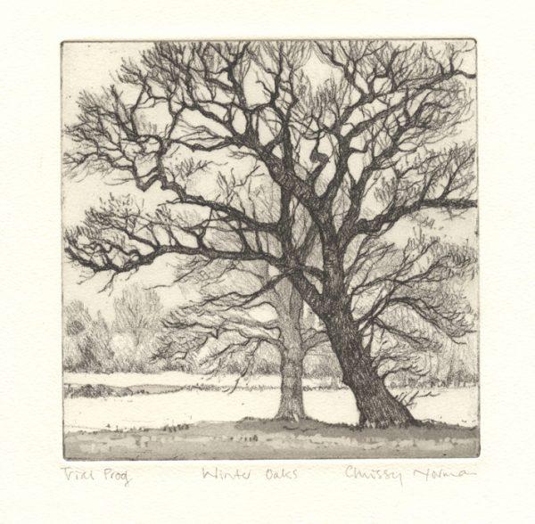 oak trees winter