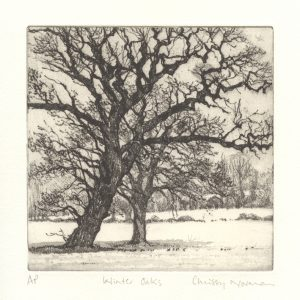Snow oak trees
